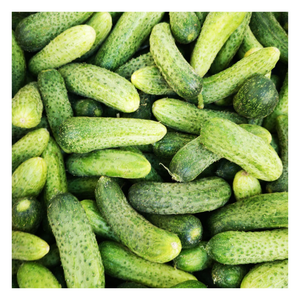 Organic Mini Organic Cucumbers | 6 pack - Fresh Village Farms