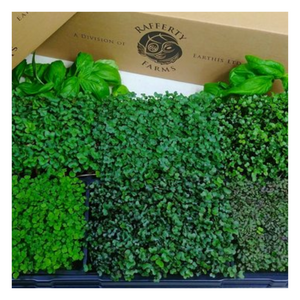 Load image into Gallery viewer, Organic Pea Shoots - 75g Bag(s) - Fresh Village Farms