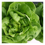 Organic Butter Leaf Lettuce | Per Head - Fresh Village Farms