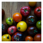 Organic Tomatoes - Medley Tomatoes | Approx 450 Grams - Fresh Village Farms