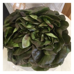 Organic Red Butter Leaf Lettuce |Per Head - Fresh Village Farms