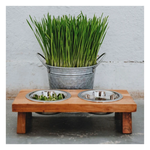Organic Living Sweet Spring Grass | For Furry Friends - Dog & Cat Friendly - Fresh Village Farms