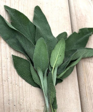 Load image into Gallery viewer, Fresh Sage Herb - 56g Bundle - Fresh Village Farms
