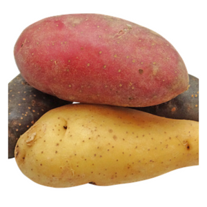 Yellow Fingerling (Small Size) - Fresh Village Farms