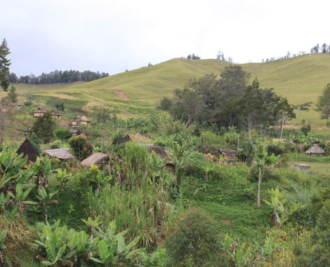 Sustainable Agriculture at Finca Pashapa