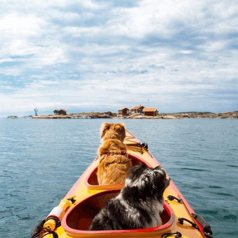 Bring your dog camping they will love the exciting adventure