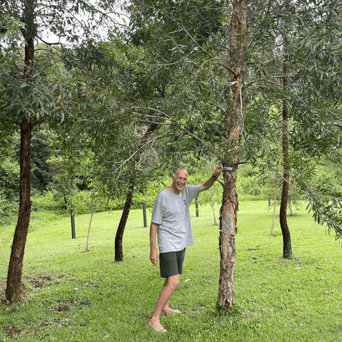 Kevin stands next to one of their eucalyptus trees in koala corridor