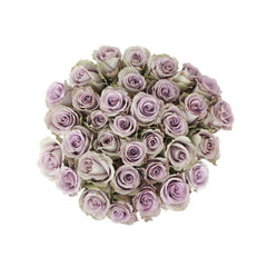 grey knights lavender roses
