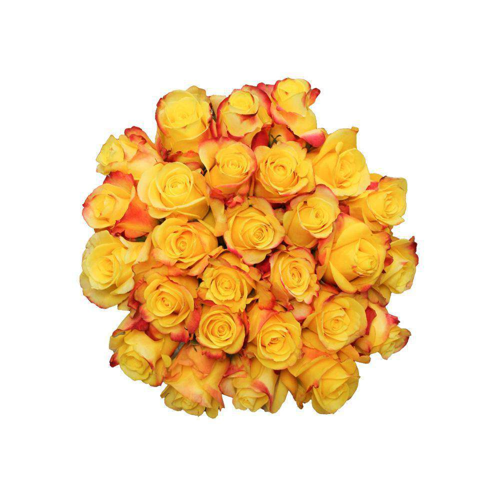 hot merengue yellow and red roses
