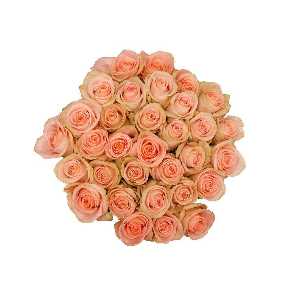 kelly coral roses