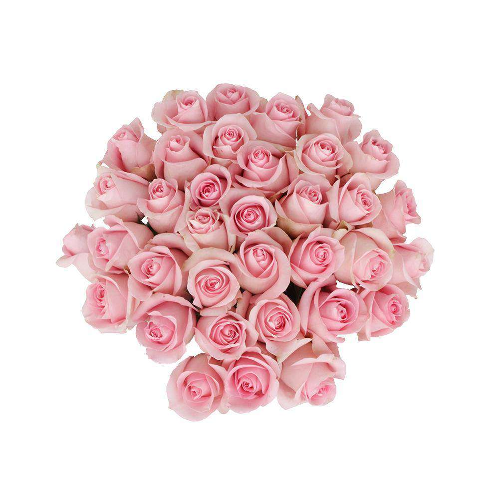 luciano pink roses