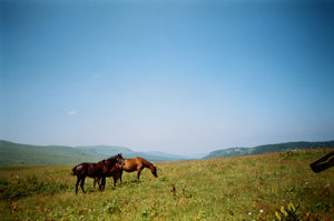 Horses standing in a pasture with a clear blue sky