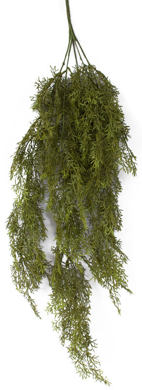 Asparagus Fern - Autumn Green - Box Lot Deal (9)