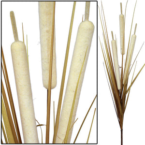 Bull Rush Bush - Cream - Extra Large (Box of 6) CLEARANCE SPECIAL