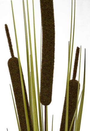 Bull Rush Bush - Green - Extra Large (Box of 6) INCREDIBLE CLEARANCE SPECIAL