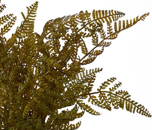 Fern - Whispering Bush Fern - Autumn