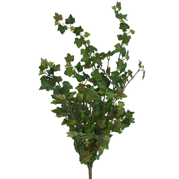 German Ivy - Bush with 12 stems - 67cm