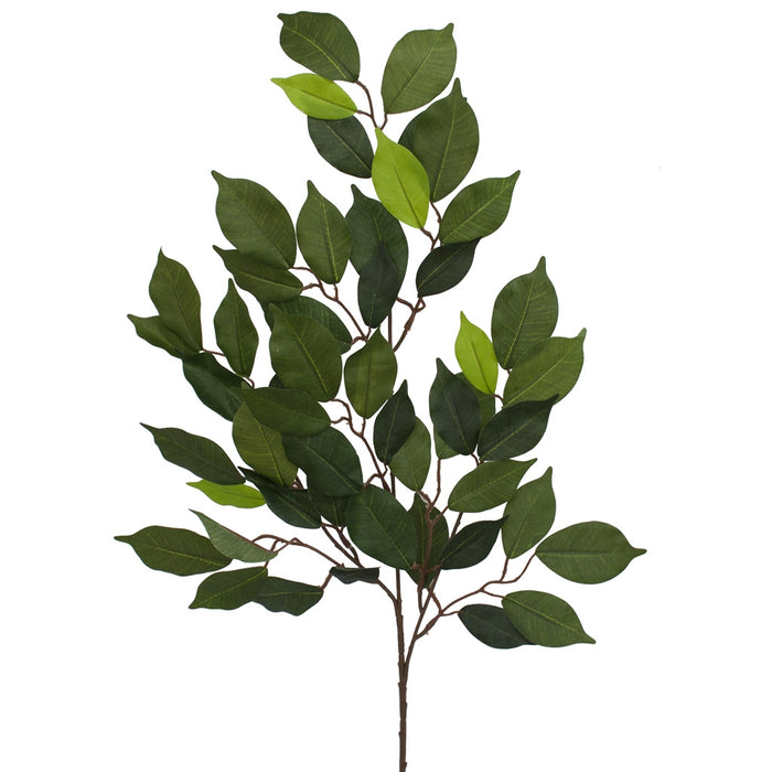 Ficus Spray - Green - 70cm