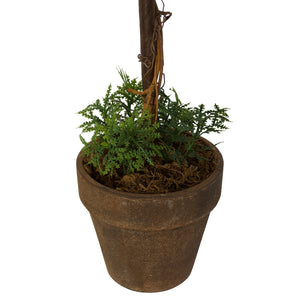 Table Topiary - Whispering Fern - 38cm