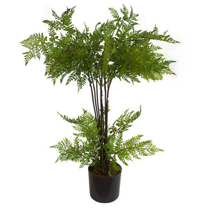Whispering Fern - Potted - 63cm - Box Lot Deal (2)