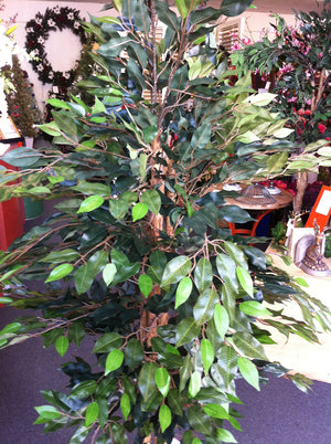 Tree - Ficus Green 200cm