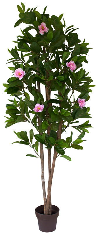 Tree - Camellia with pink flowers
