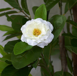 Tree - Camellia with white flowers