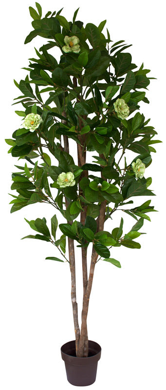 Tree - Camellia with Green flowers