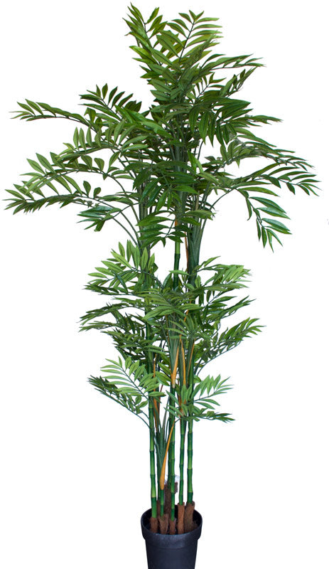 Tree - Bamboo Phoenix Palm 135cm *** EX-SHOWROOM SPECIAL ***