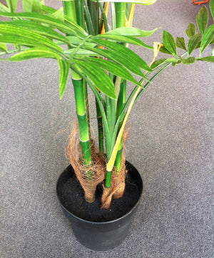 Tree - Bamboo Phoenix Palm - 175cm - Box Lot Deal *** JUST ARRIVED ***