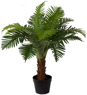 Fern - NZ Ponga Fern Small 63cm