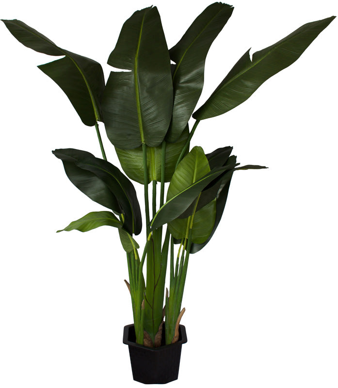 Banana Palm Tree 136cm - Box Lot Deal of two palms