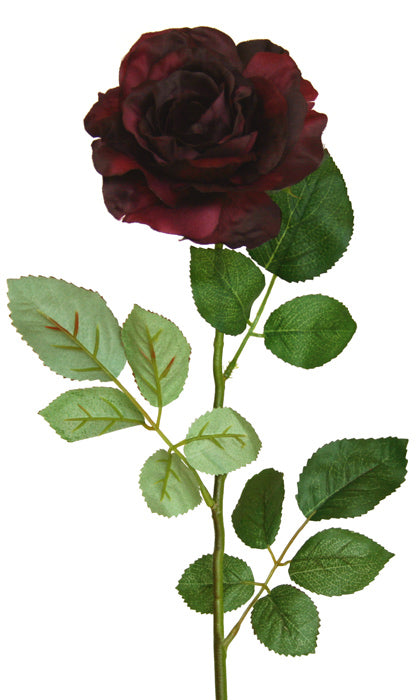 Rose - Chelsea - Full Bloom - Black Wine *** SPECIAL ***