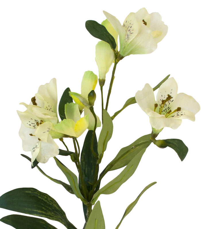 Alstromeria Spray (Peruvian Lilly) - White - Box Lot Deal (6)