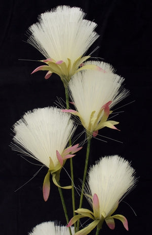 Bottle Brush Dandelions - Cream White - Box Lot Deal (6)