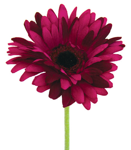 Gerbera - Purple