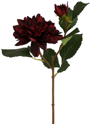 Dahlia - Burgundy Blood Red - Box Lot Deal (6)