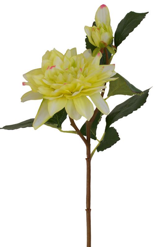Dahlia - Lemon Lime