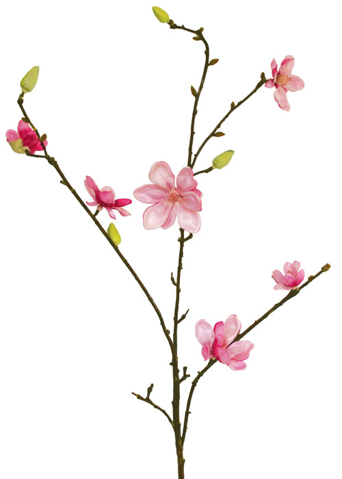 Magnolia Stellata - Pink - Box Lot Deal (6)