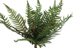 Fern - NZ Bush