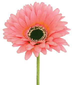 Gerbera - Baby Pink - Box Lot Deal