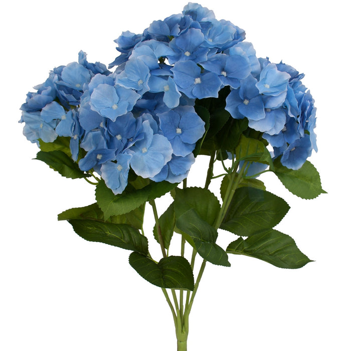 Hydrangea bush - Cambridge variety - Blue