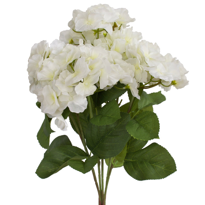 Hydrangea Bunch - Cambridge variety - White