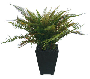 Fern - Potted - NZ Dark Green