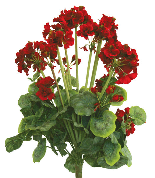 Geranium Bush - Red - SPECIAL