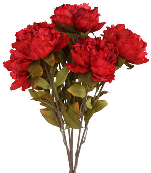 Peony Bunch - Colombo Street Red