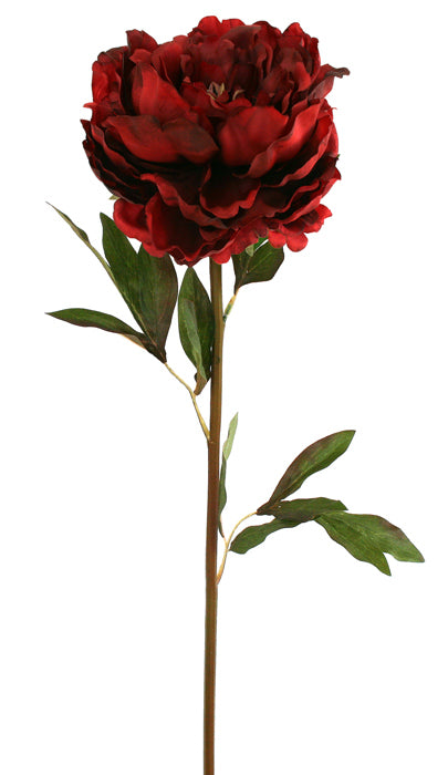 Peony Spray - Kansas Red