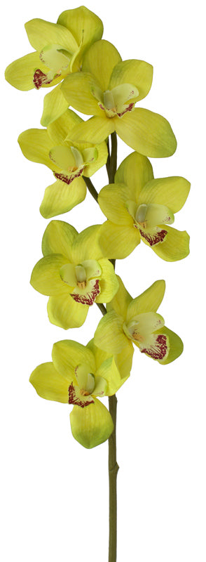 Orchid Cymbidium - Tropical Green