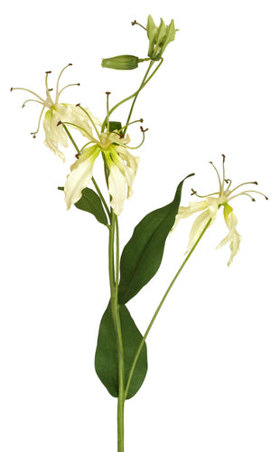 Gloriosa Spray