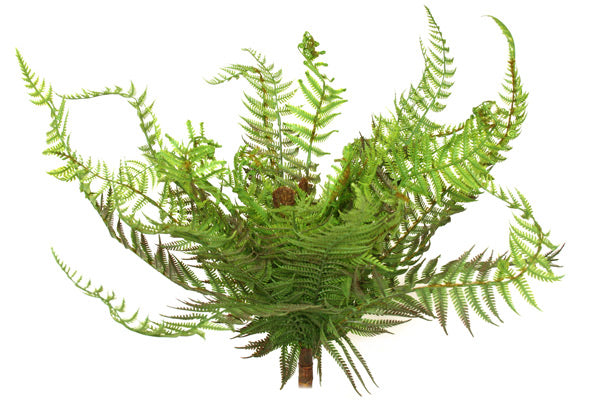 Fern - NZ - Large